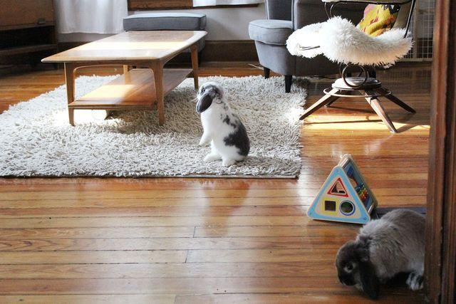Exploring Bunnies